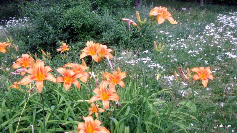 Парк-цветы-оранж-1