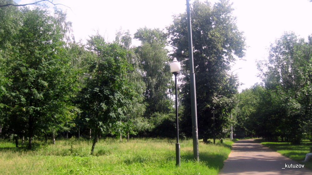 Парк-берез-2