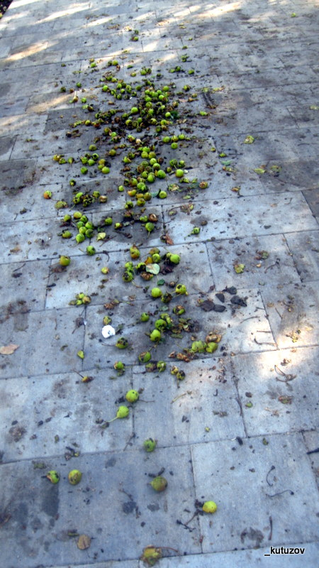 Яблоки на плитке