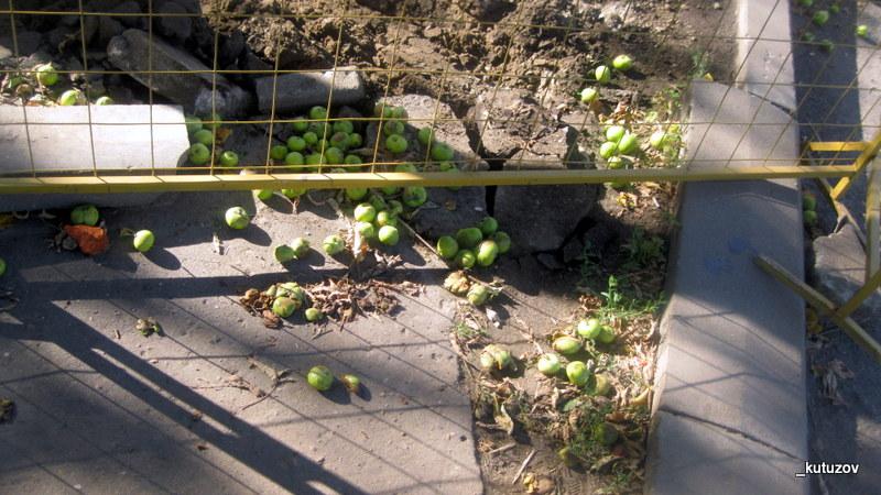 Яблоки на плтике-1