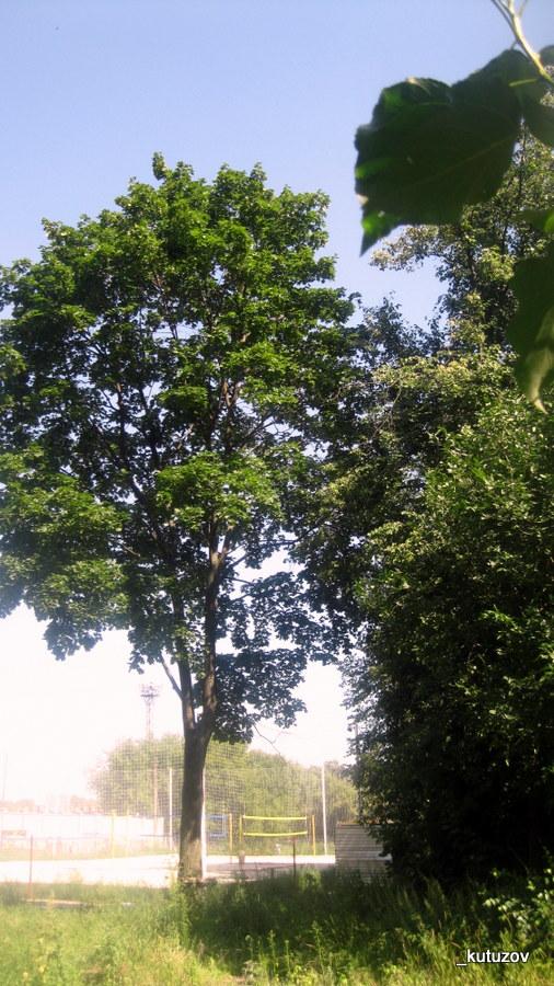 Любер-дерево