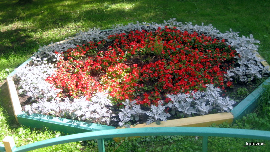 Цветы-клумба