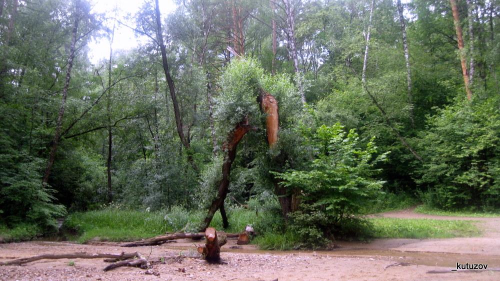 Парк-битц-дерево-слом