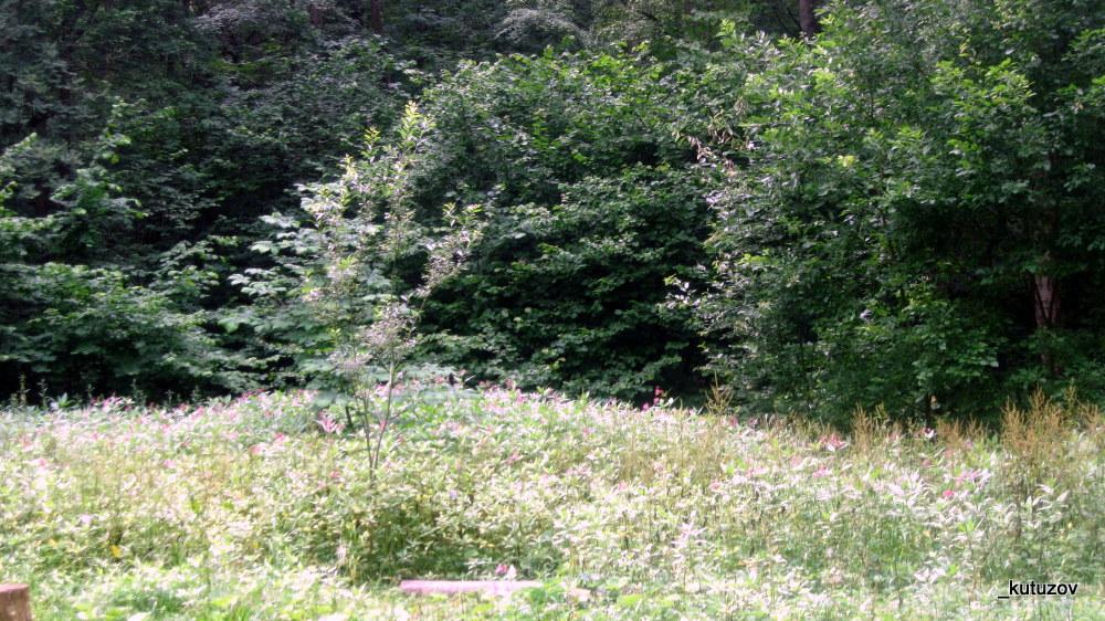 Парк-битц-деревья