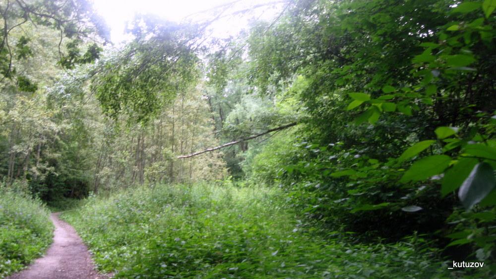 Парк-битц-зелень