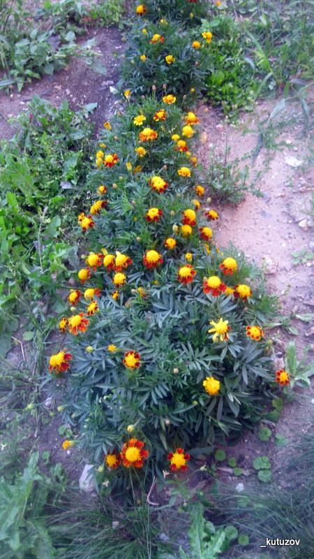 Цветики-1