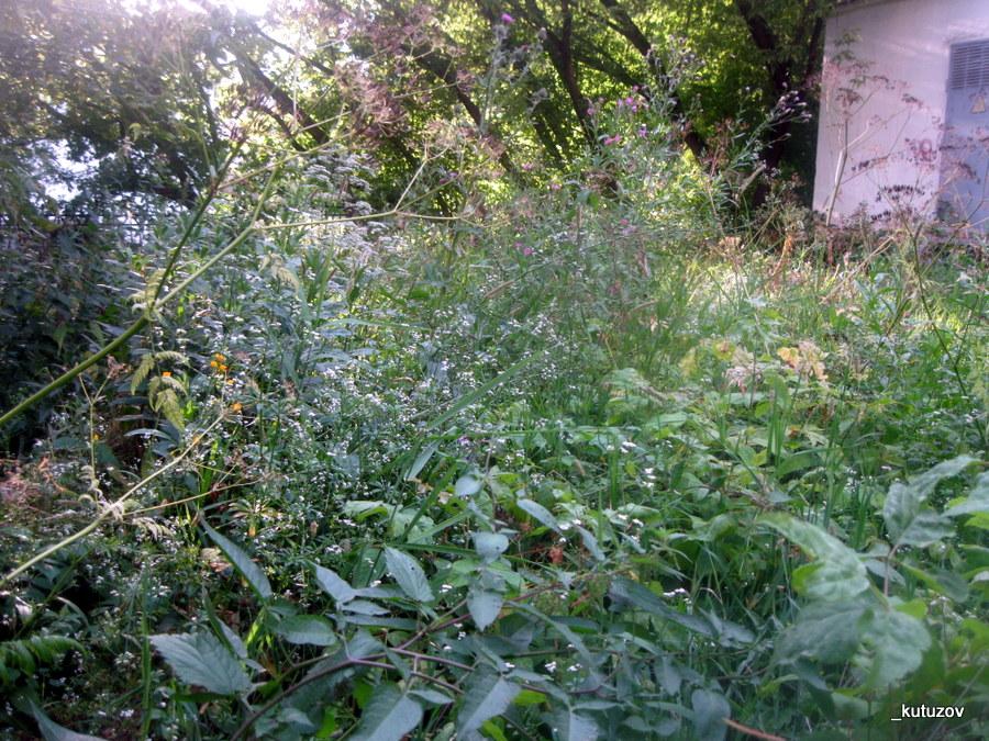 разная трава фото