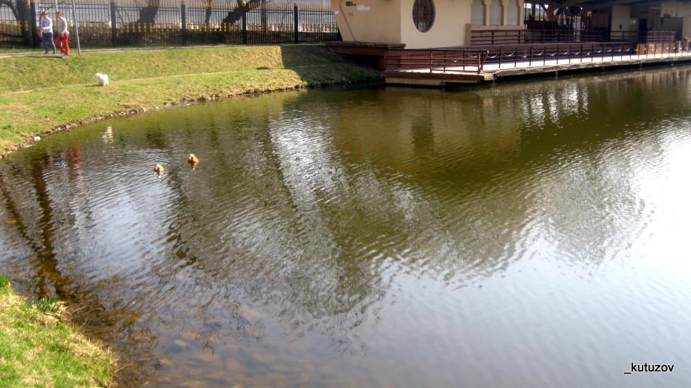 Парк-пруд
