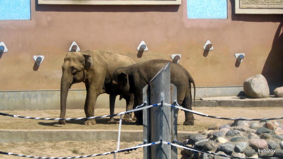 Зоо-слоны-2