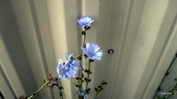 Цветы-крупно