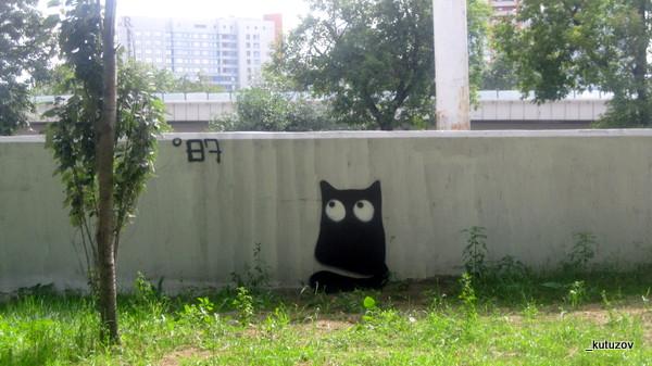 Черный кот-1