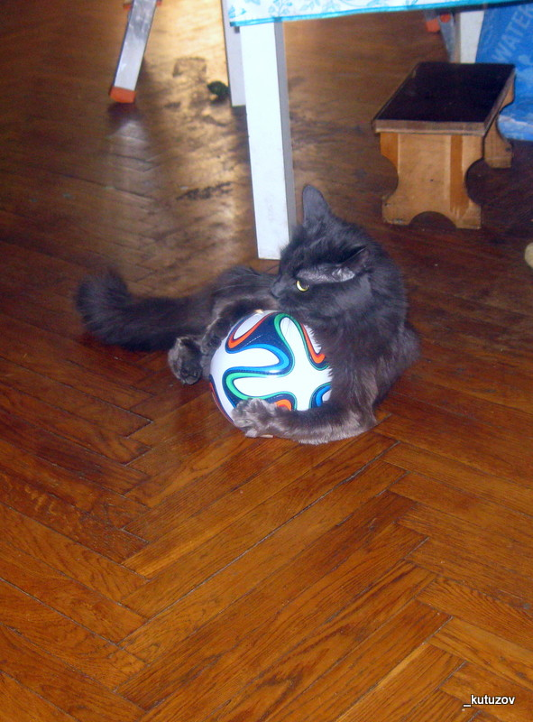 Кот-мяч