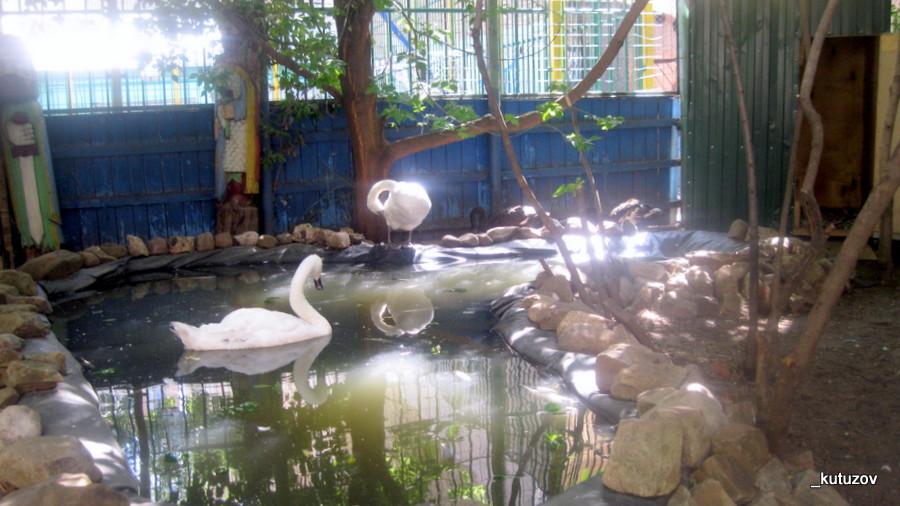 Эльдар-лебеди