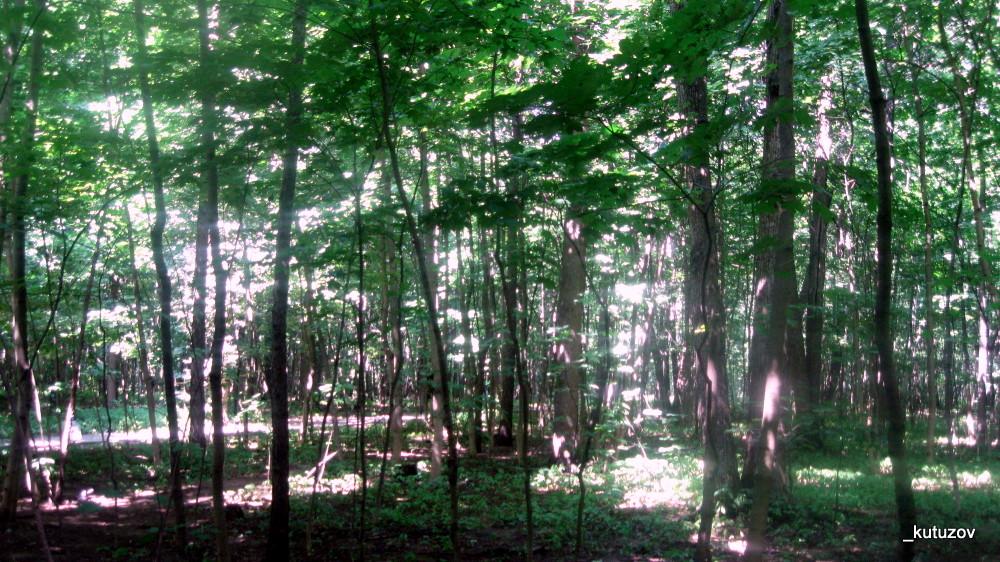 Фили-деревья