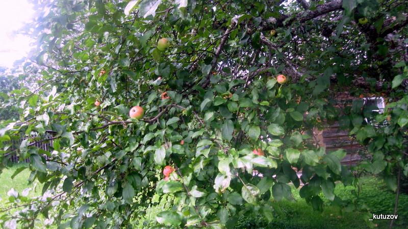 Михай-яблочки
