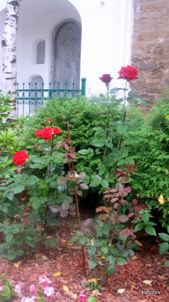 Печоры-розы