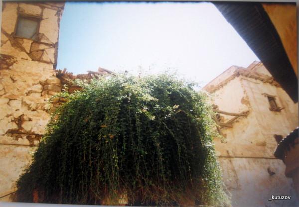 Монастырь-купина