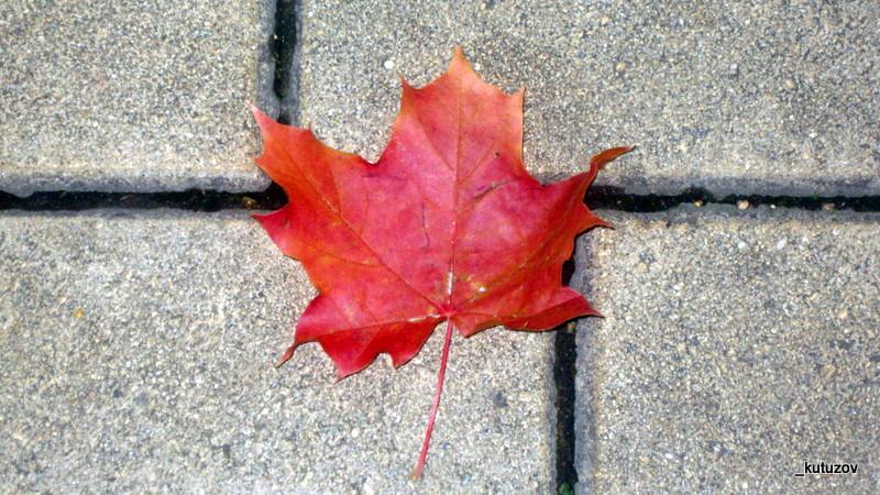 Осень-красный-лист