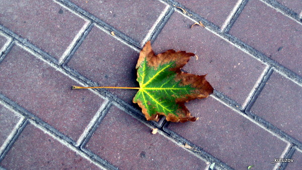 Осень-1