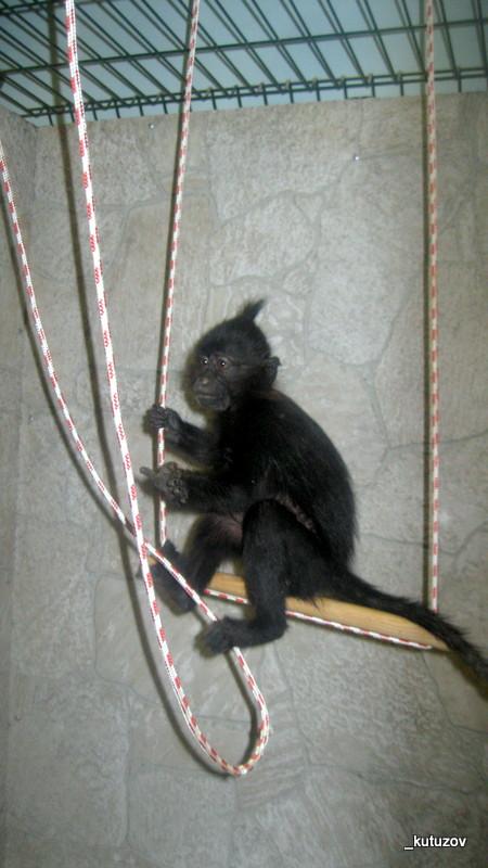 Зоо-обезьян