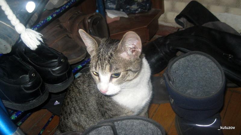 Кошка-1