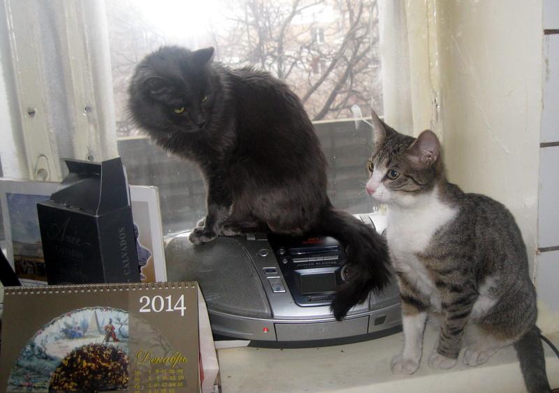 Два кота два