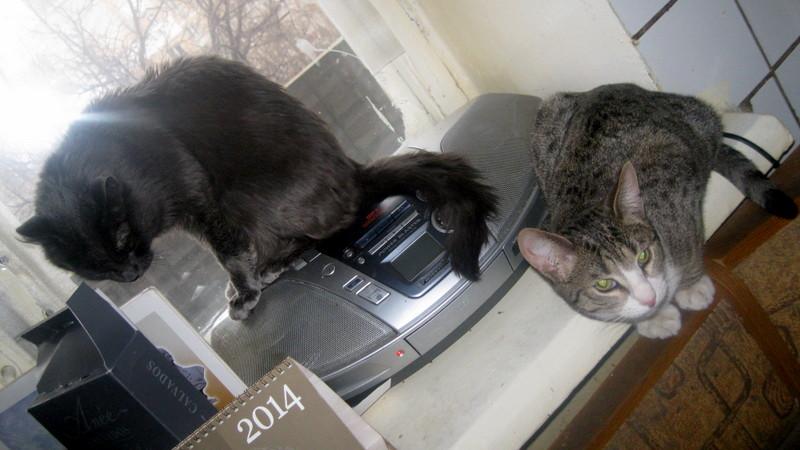 Два кота-1
