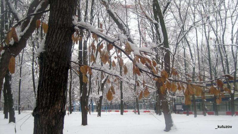 Снег-желт