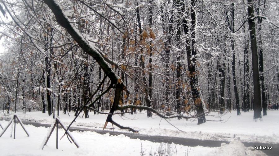 Снег-желт-1