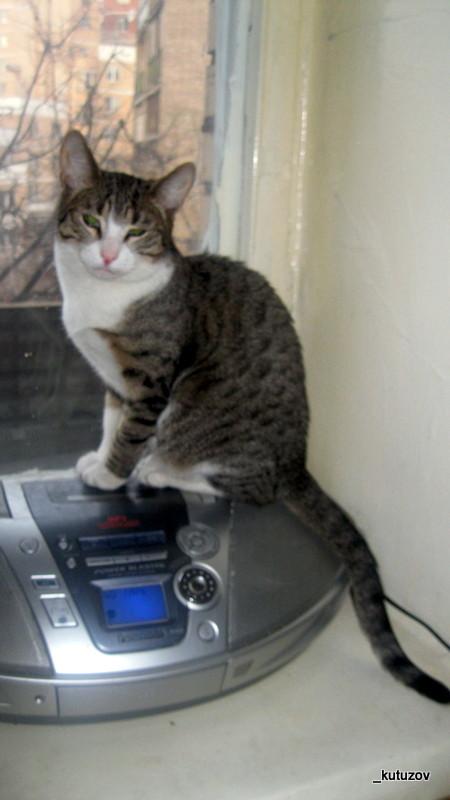 Младший кот