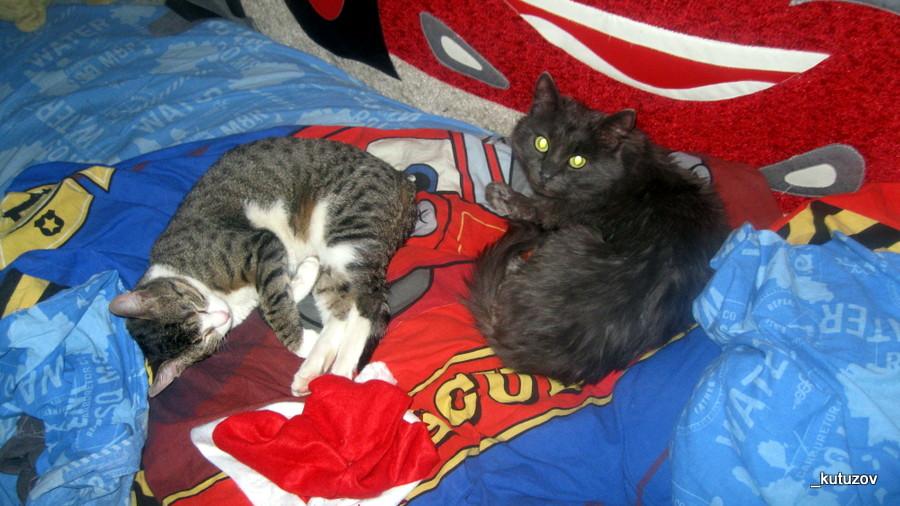Спят коты
