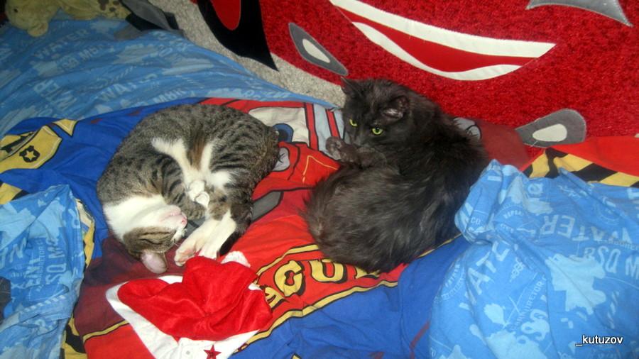 Спят коты-1