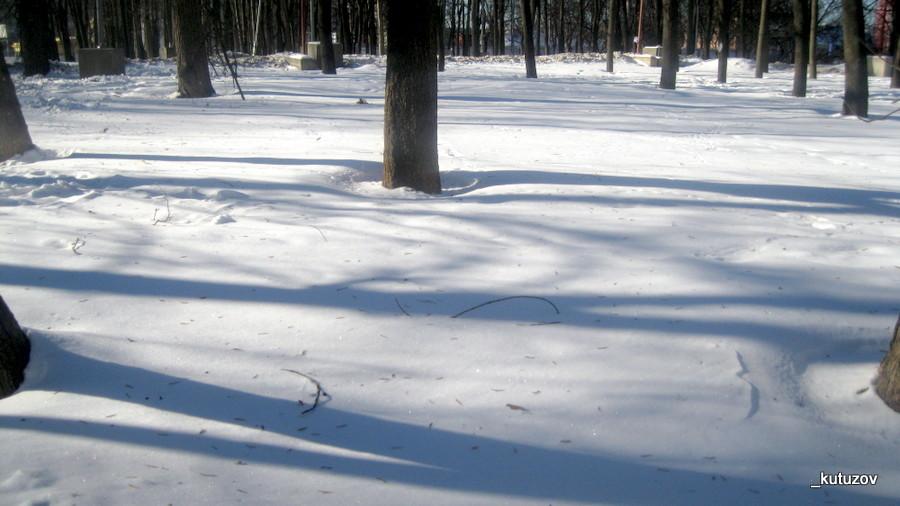 Тени-зимой-1