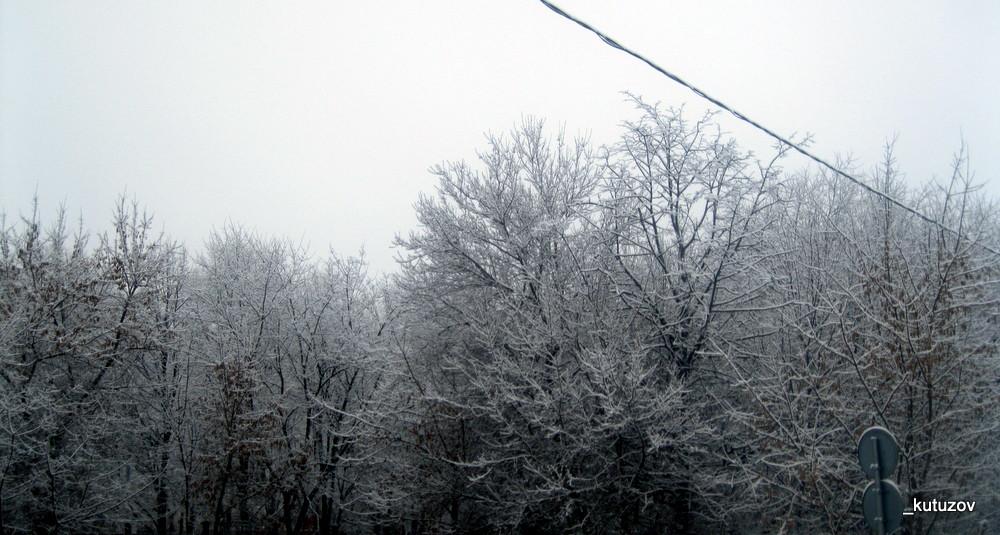 Белые деревья-2