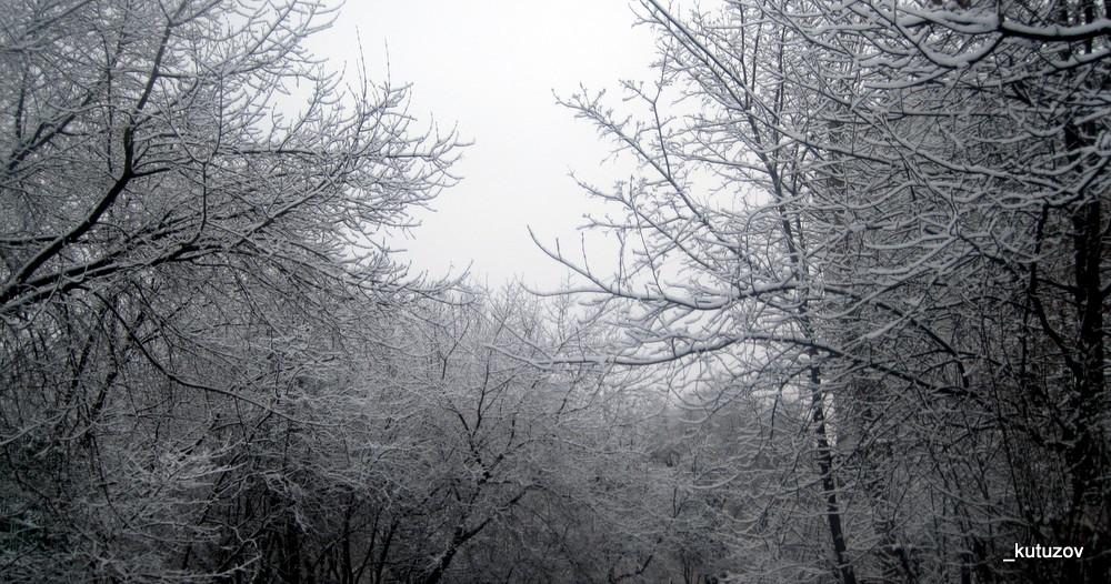Белые деревья-5