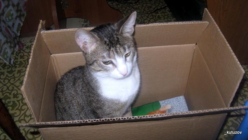 Мартин-коробка-2