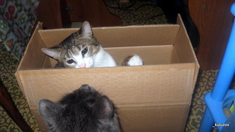 Мартин-коробка