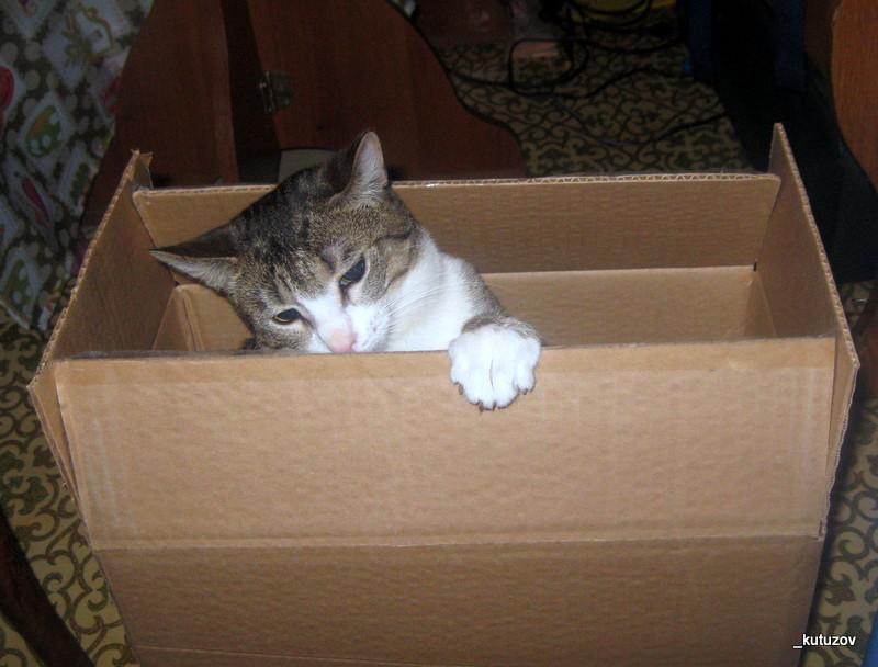 Мартин-коробка-1