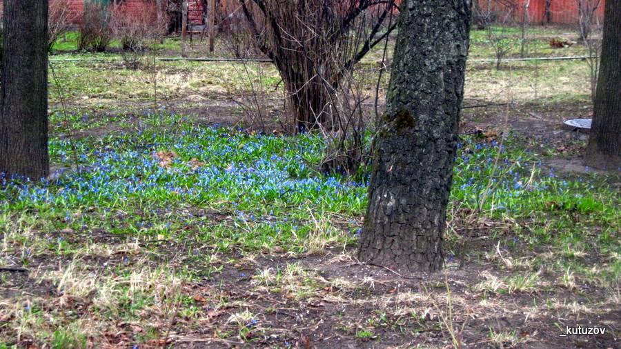 Цветы голубые