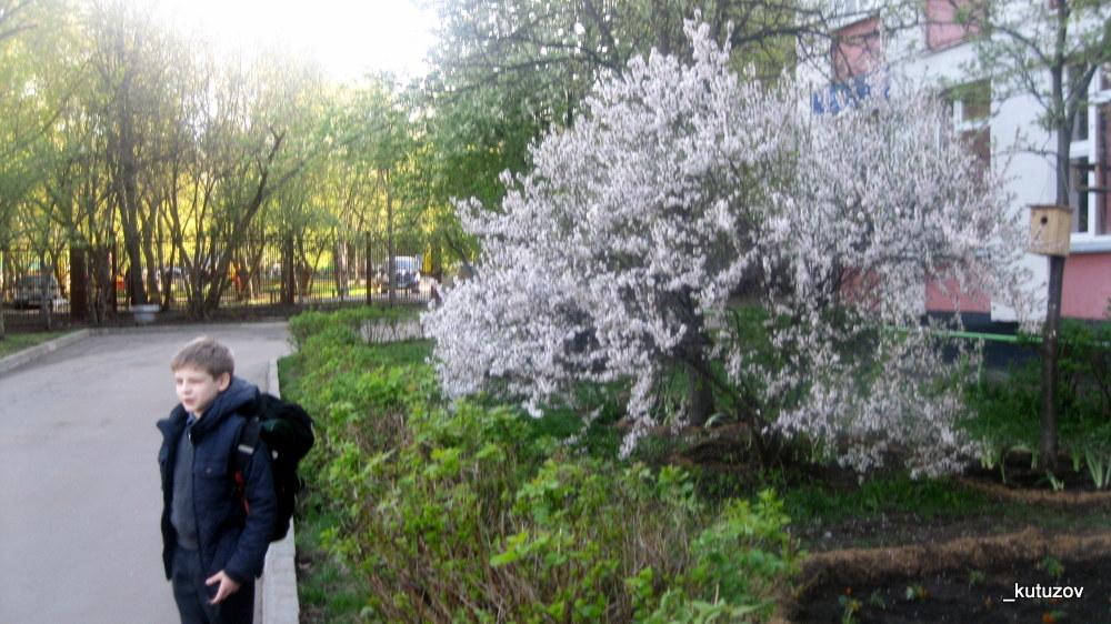 Черемуха-Вася
