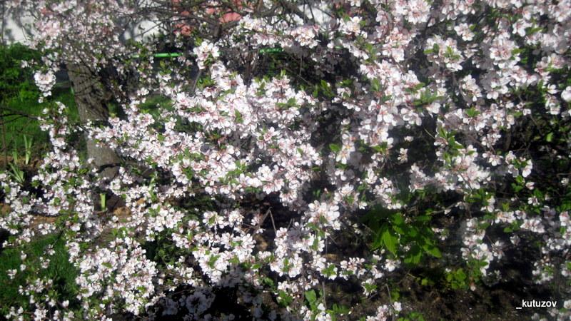 Цветы белы