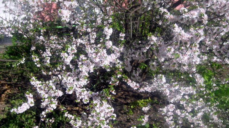 Цветы белл