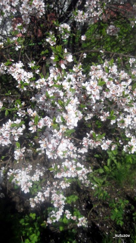 Цветы бел