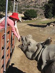 Folly feeding a rhino