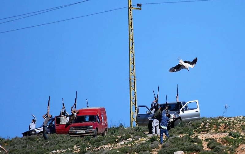 The estimated number of illegally killed birds in Lebanon is more than 2,600,000 annually.