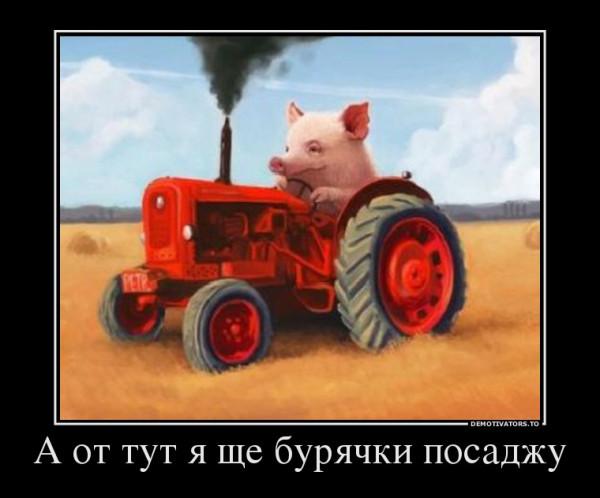 buryachki