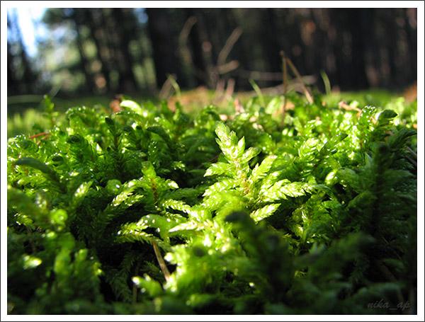лес (2)