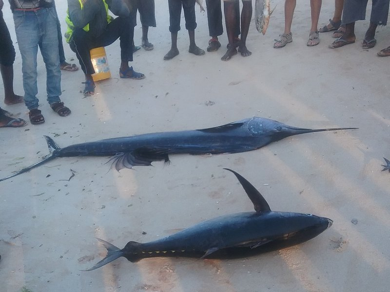 Dolphin cruise. Улов рыбаков.jpg
