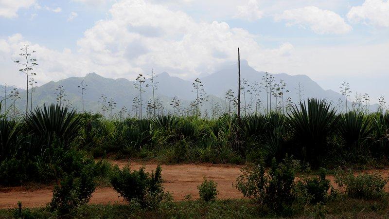 Mikumi road. Вид на горы Улугуру.jpg