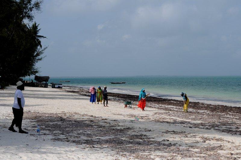 Пляж. Уборка водорослей.jpg
